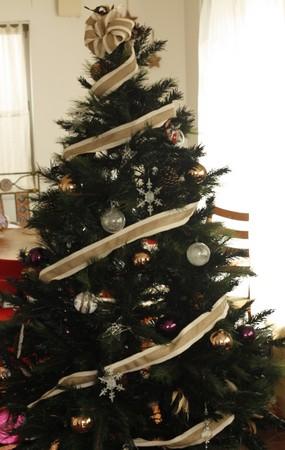東京の料理/お菓子教室calmo 今年のクリスマスツリー